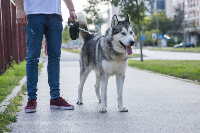 Man walking his dog on the street